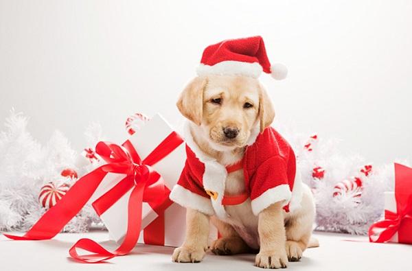 Собачка - подарок на Новый год